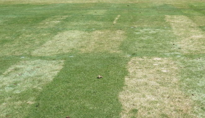 New Contend™ Fungicide now registered for Snow Mold